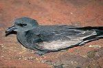 fauna-tenerife-canarie