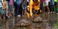 liberazione-tartarughe-tmb