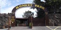monkey-park-27