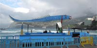 carnevale-2014-1-tmb